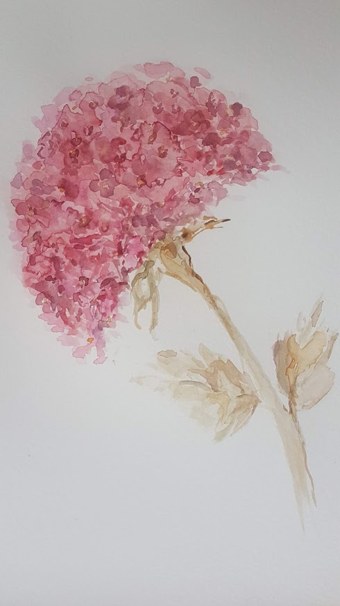 November Hydrangea Watercolour Painting Rose and Foxgloves